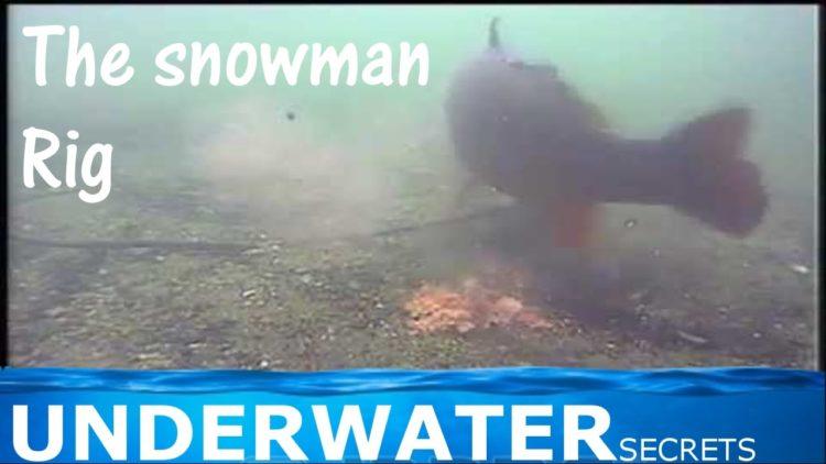Snowman boilie rig