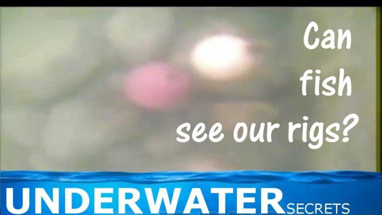 blank post strangest carp behaviour ever underwater