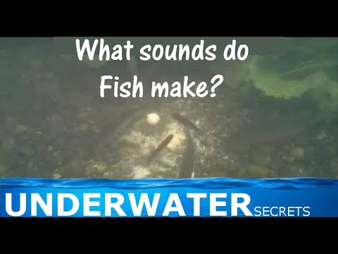 What sounds do fish make?